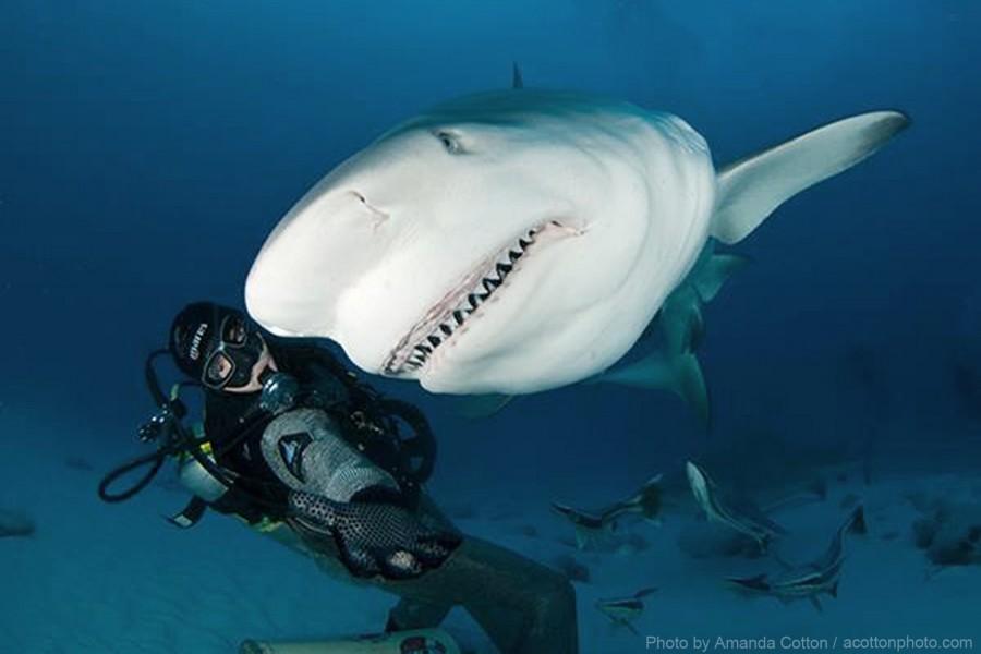 scuba diving experience essays