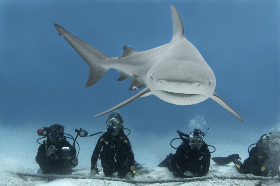 playa-del-carmen-diving-with-sharks