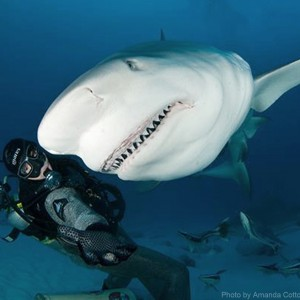 playa-del-carmen-bull-shark-dive