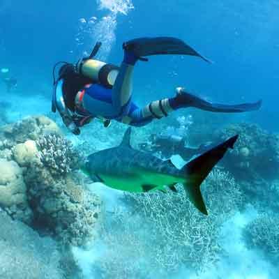 shark-diving-playa-del-carmen
