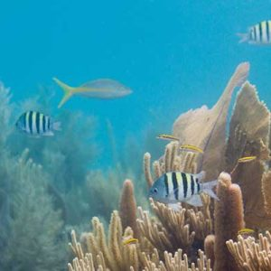 playa-del-carmen-reef-snorkel-tour