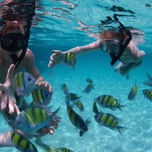 playa-del-carmen-snorkeling-tour