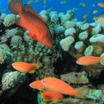 playa-del-carmen-discovery-reef-dive