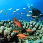 playa-del-carmen-scuba-diving
