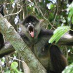 monkey-tour