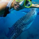 whale-shark-tour-from-playa-del-carmen