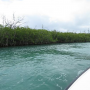 cancun-mangrove-boat