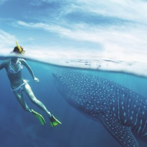 whale-shark-cancun