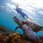 snorkeler watching a sea turtle