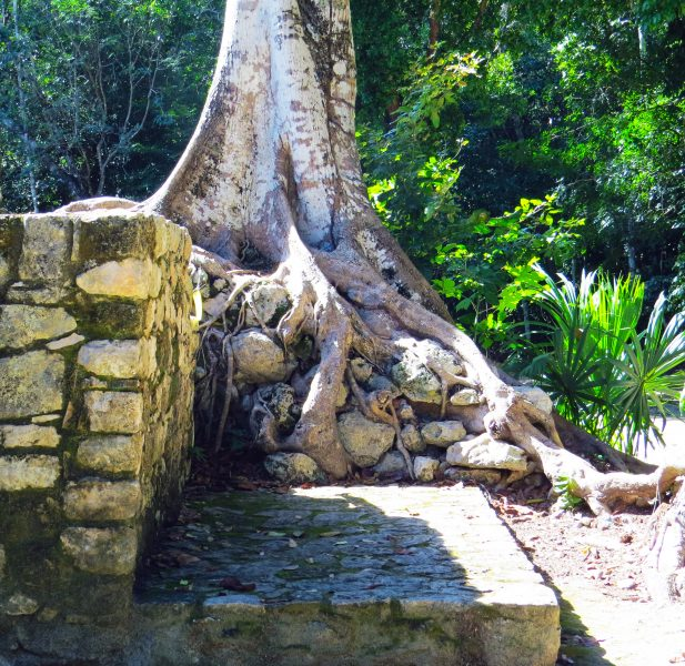The Folklore of the Mayan Jungle