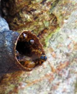 Mayan Bees