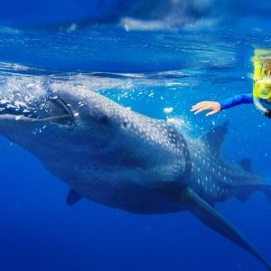 whale-shark-tour-cancun