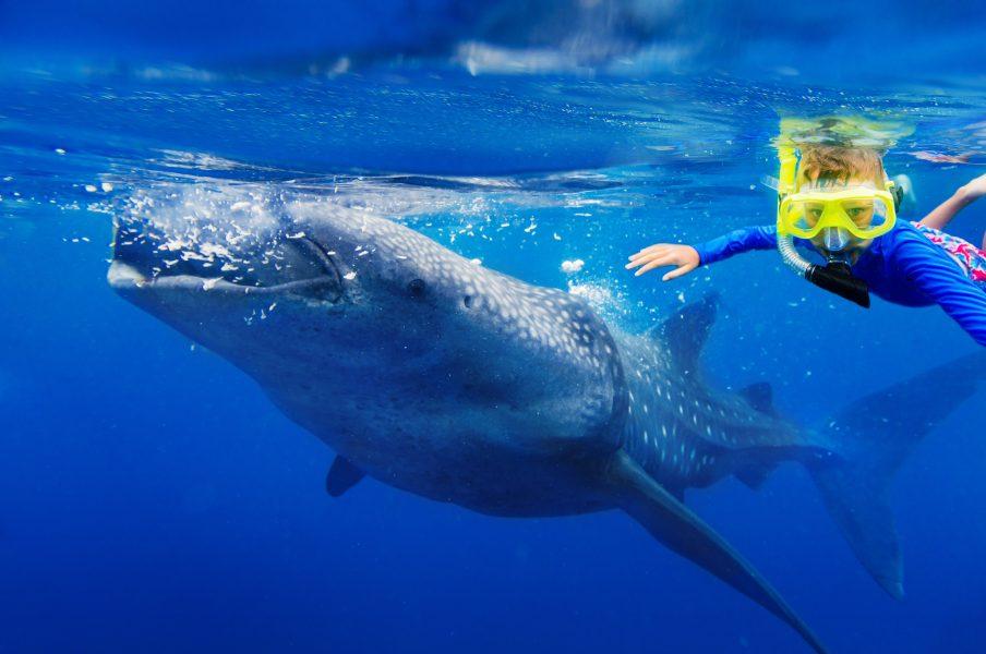 Roatan Whale Shark Tours
