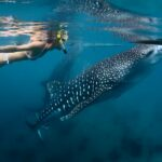 lady snorkeling with whale shark