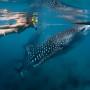 tour-whale shark