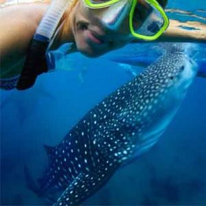 whale-shark-snorkeling-tulum