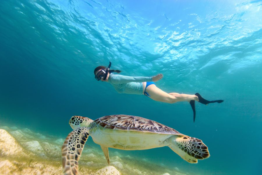 Akumal snorkel and cenote tour from playa del carmen for Best world photos