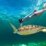 woman snorkeling and swimming with turtle