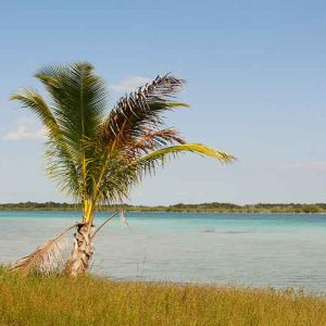bacalar-mexico-tree
