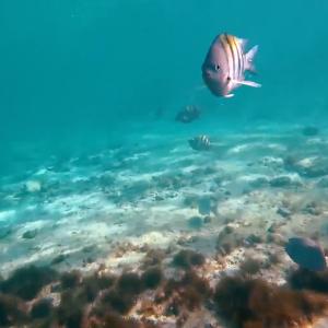 Snorkeling-blue-water-tulum