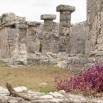 Tulum-ruins-flowers
