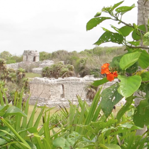 Tulum-ruins-jungle
